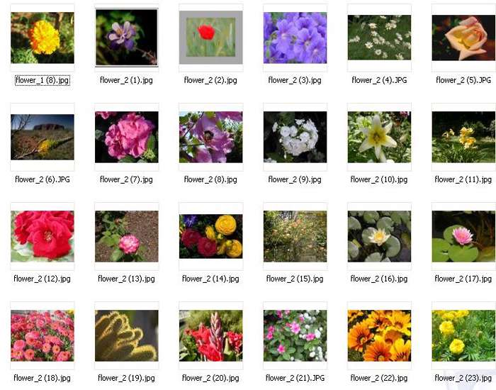 Gallery Flower No.2