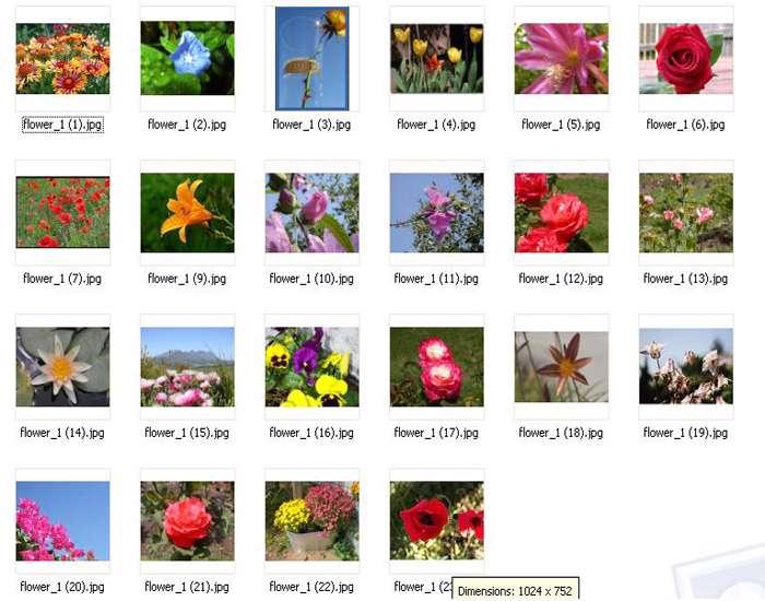 Gallery Flower No.3