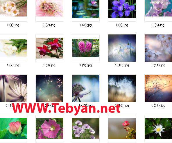 Gallery Flower No.4