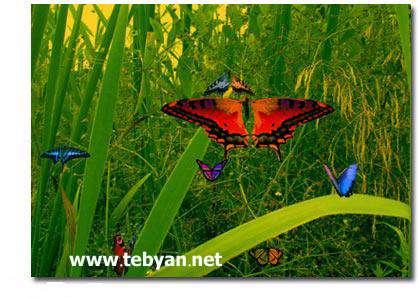Desktop Butterflies 3D