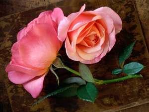 پس زمینه های زیبای گل (1)