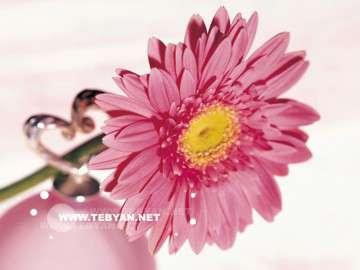 گل ها ,طبيعت,غنچه