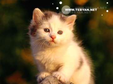 حيوانات اهلي ,گربه , حيوانات خانگي