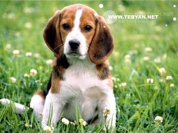 حيوانات اهلي ,سگ , حيوانات خانگي