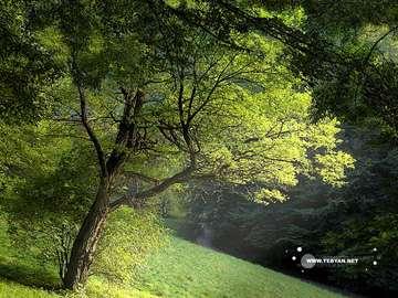 جنگل , درخت هاي انبوه , علفهاي خودرو , پوشش گياهي