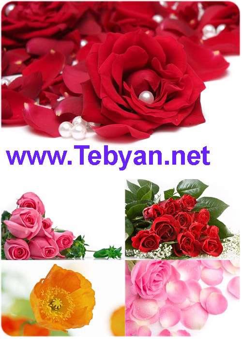 HQ Flowers