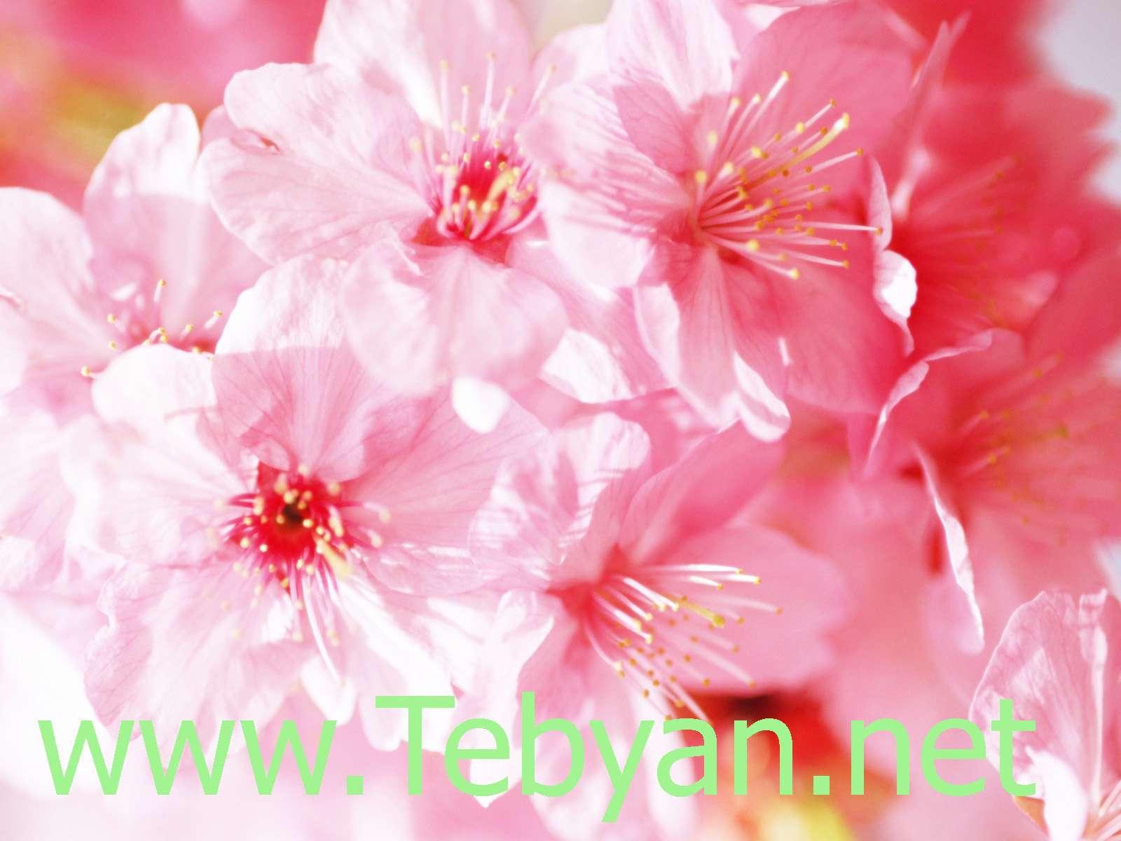 Spring Wallpaper -5