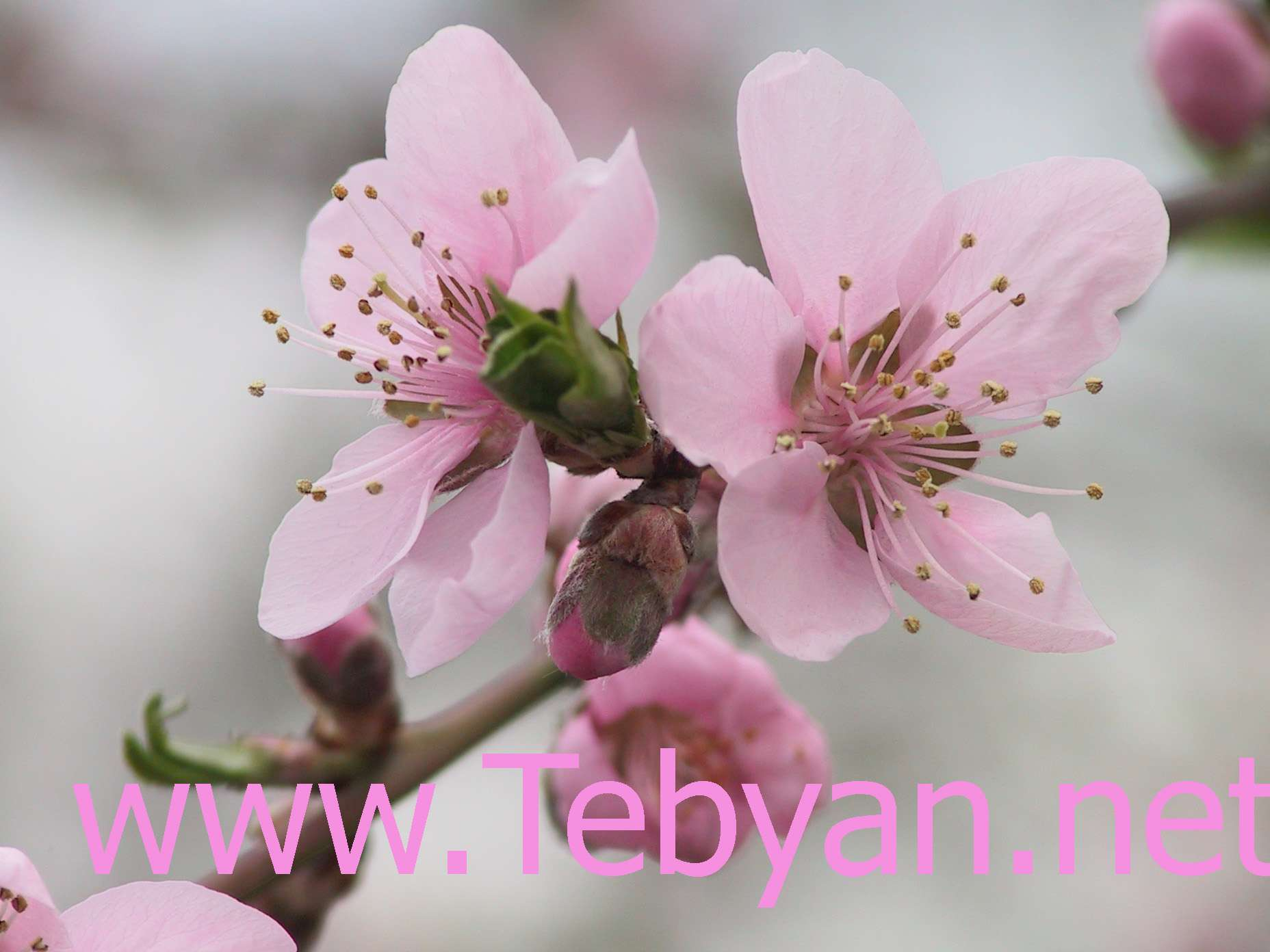 Spring Wallpaper -1