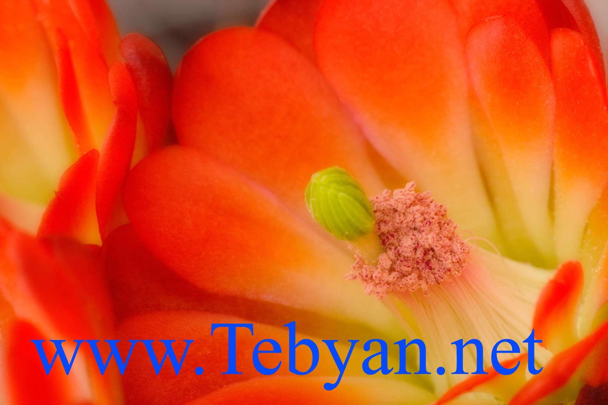 تصاویر ویژه از گل های وحشی
