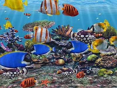 Dream Aquarium 1.234 full