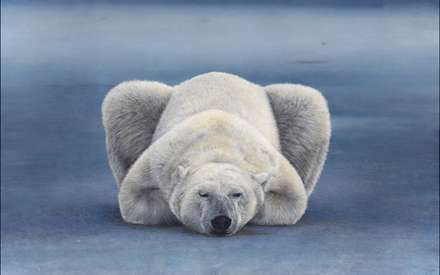 نقاشي زيبا از يک خرس قطبي