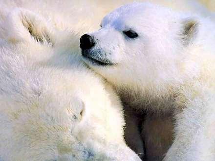 بچه خرس در كنار مادر