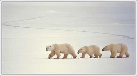 سه خرس ماجرا جو