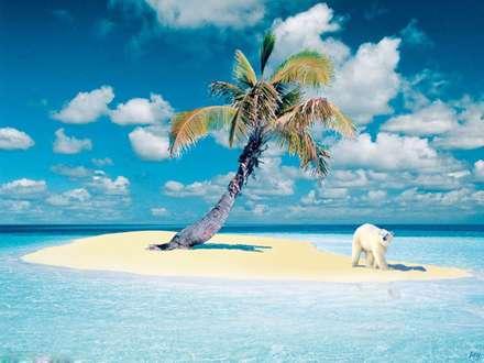 خرس قطبي در هاوايي