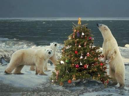کريسمس خرس هاي قطبي