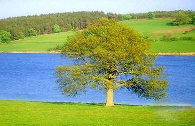 تم ویندوزسون تصاویر طبیعت بهمراه تقویم فصل بهار سال 1391، سری سوم