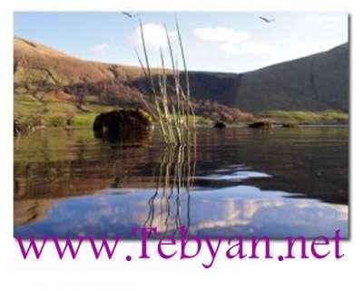 Beautiful Water Reeds Screensaver