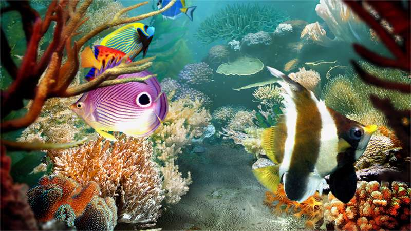 Tropical Fish 1.1.0.6