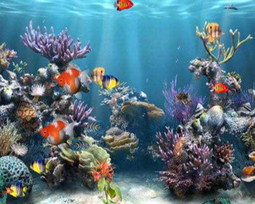 محافظ صفحه نمایش Coral Reef Adventure Aquarium 3D Screensaver v1.0