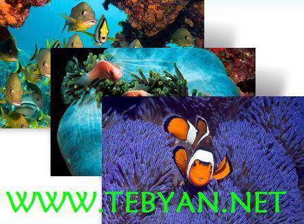 پوسته (تم) ماهی های زیبای دریایی برای ویندوز محبوب 7