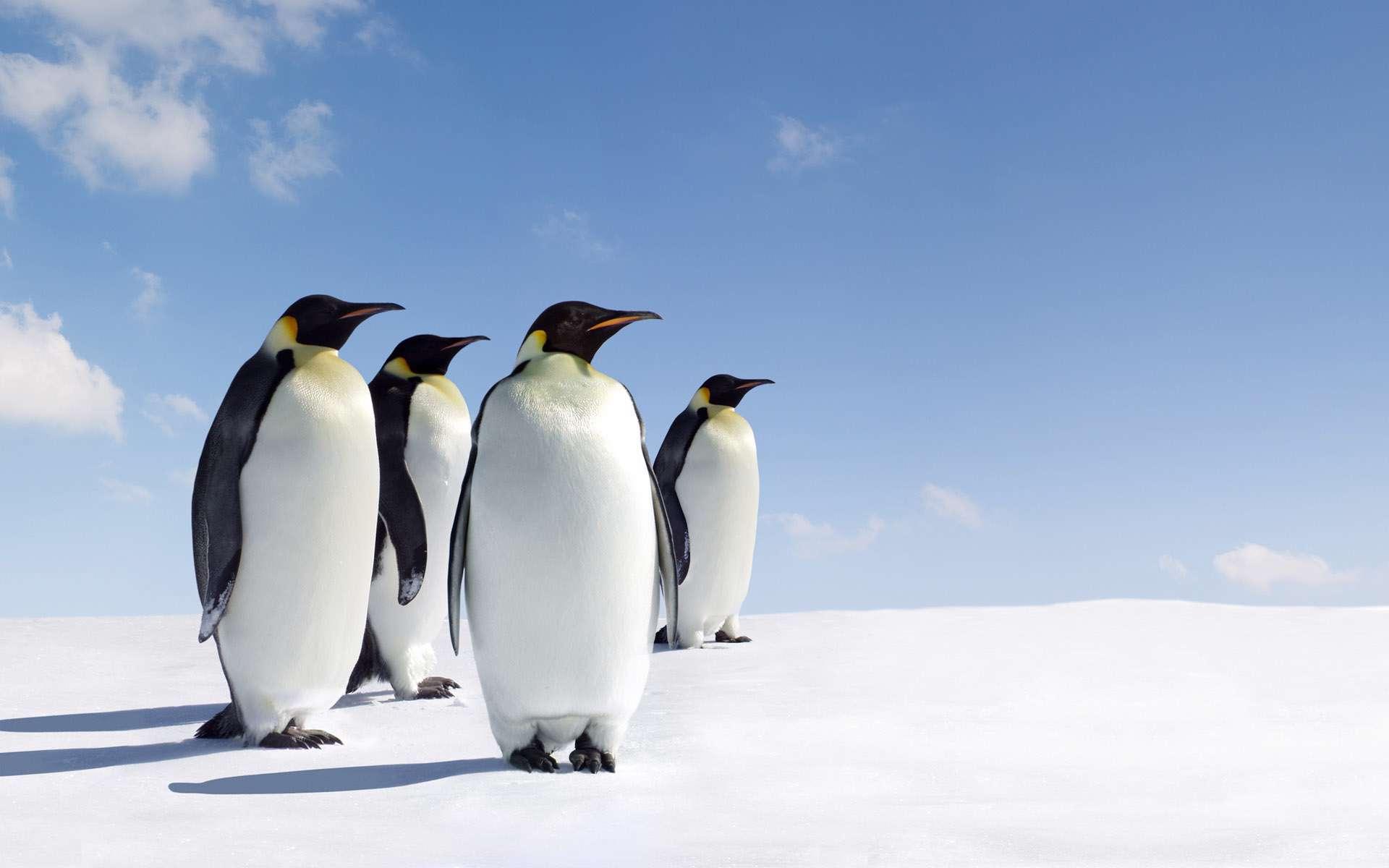 تم زیبا ویندوز سون تصاویر طبیعت و حیوانات قطب، سری شصت و چهار