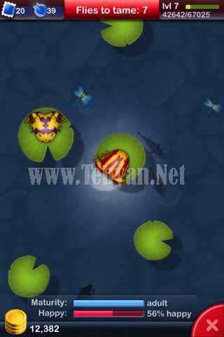 بازی موبایل قورباغه ها Pocket Frogs آندروید