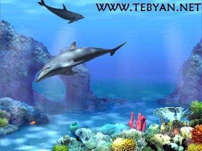 اسکرین سیور دلفین، Dolphins 3D Screensaver 1.0 Build 3