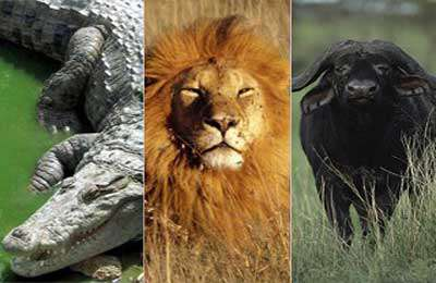 ده کلیپ حیات وحش - شکار