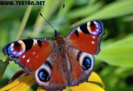 55 تصویر (والپیپر) فوق العاده زیبا از حیوانات با کیفیت 1600×2560
