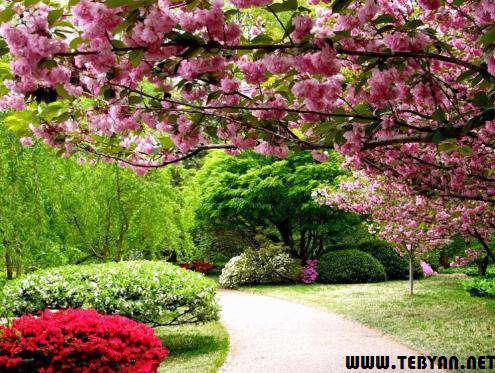 25 تصویر (والپیپر) زیبا و فوق العاده از بهار طبیعت با کیفیت بسیار بالا