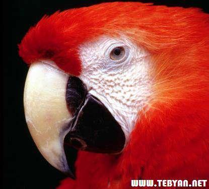 155 تصویر (والپیپر) زیبا از پرندگان با کیفیت بالا