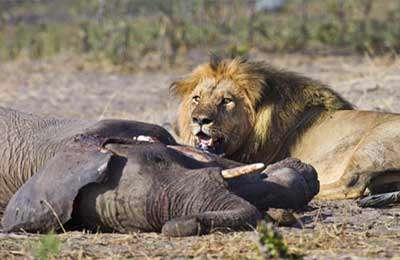 ده کلیپ حیات وحش - تقابل حیوانات