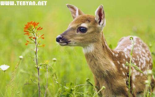 40 تصویر (والپیپر) واقعی از حیوانات و حیات وحش با کیفیت Full HD