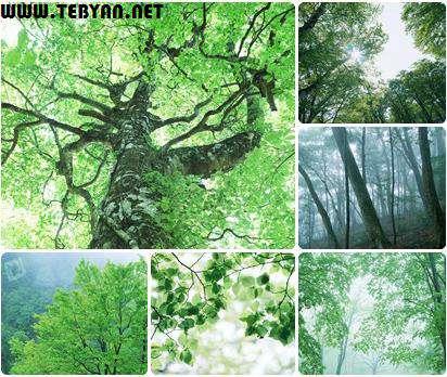 مجموعه عکس های جنگل و تابش نور از میان درختان