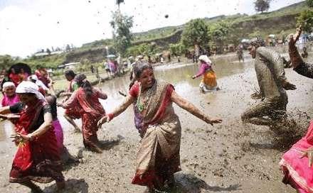جشنی جالب به مناسبت آغاز فصل برنج کاری
