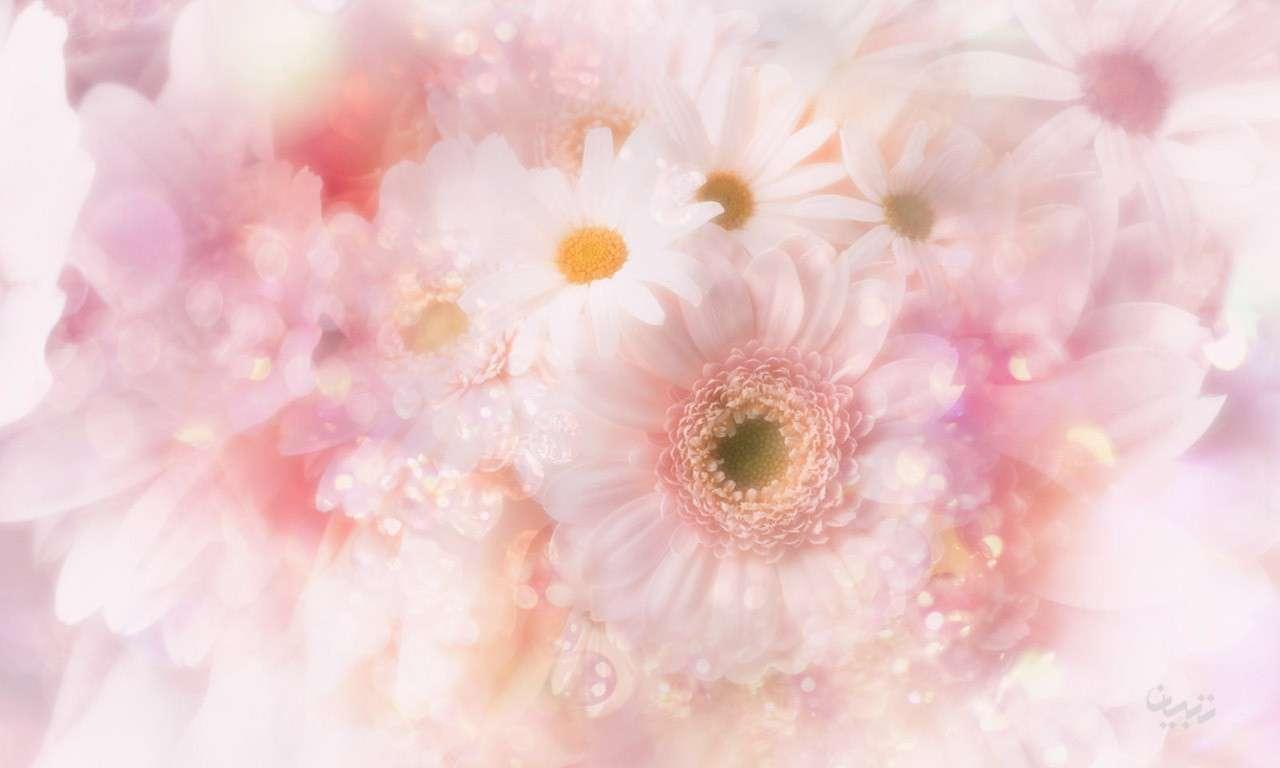 تصویر لایه باز پس زمینه گلدار با فرمت psd، سری پنجم
