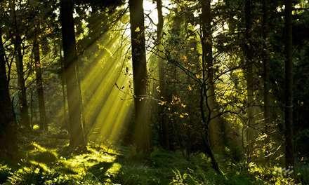 جنگل انبوه