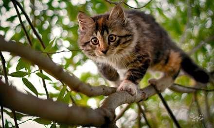 گربه درحال راه رفتن روی درخت
