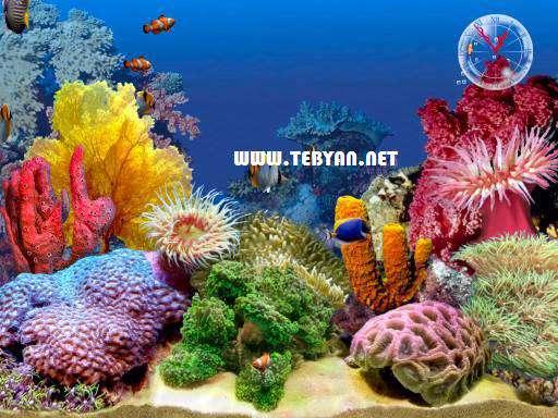 محافظ صفحه نمایش ماهی های زیبا، Tropical Fish 3D Screensaver 1.2 Build 7