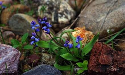گل های روییده در لابه لای سنگ ها