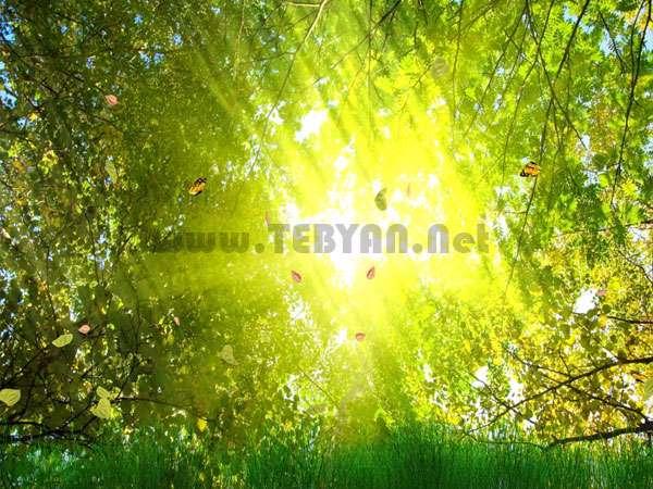 محافظ صفحه نمایش و کاغذدیواری متحرک طبیعت طلایی، Golden Nature ScreenSaver