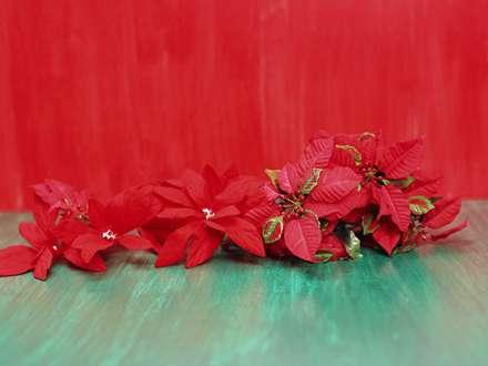 گل های قرمز