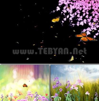محافظ صفحه نمایش بهشت پروانه، Butterfly Paradise ScreenSaver