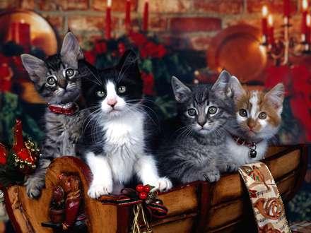 گربه های ملوس