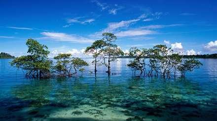 درختانی میان آب