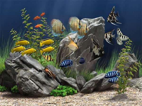 محافظ صفحه نمایش آکواریوم، Dream Aquarium Screensaver 1.2592