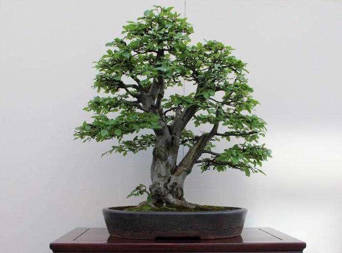 تصاویر وکتور مجموعه درخت های متنوع از شاتر استوک، سری اول