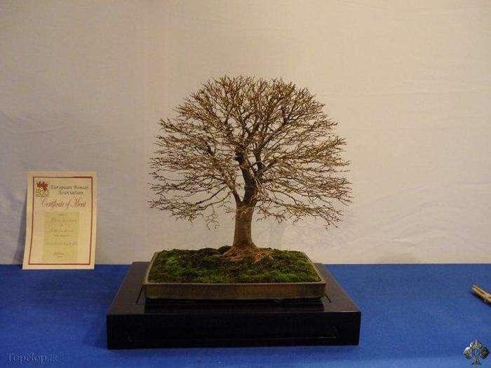 تصاویر وکتور مجموعه درخت های متنوع از شاتر استوک، سری سوم