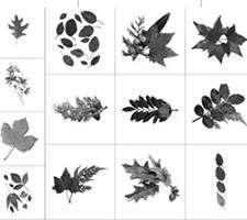 براش ایجاد پاییز (Fall Brushes)