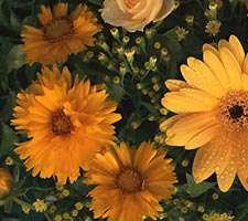 مجموعه 35 والپیپر زیبا با موضوع گل رز